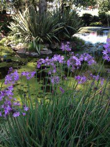 water_garden