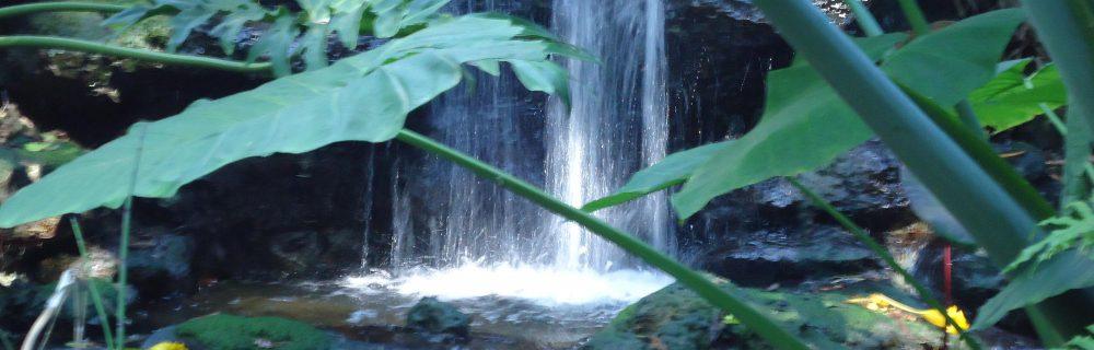 Water garden MGD©